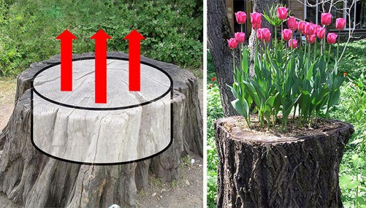 Transformez les souches et troncs darbres en bacs à fleurs ...