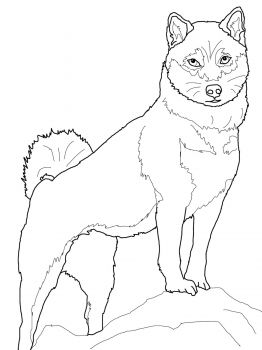 Shiba Inu Coloring Page Super Coloring Dog Coloring Book Shiba Inu Dog Coloring Page