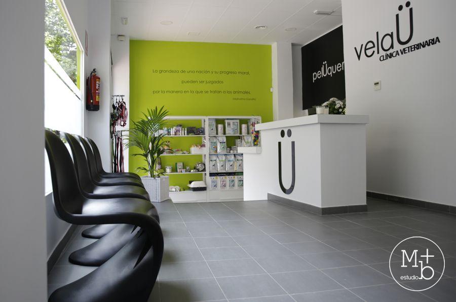 Pin De Violeta Sidira Em Vet Clinica Veterinaria Hospital