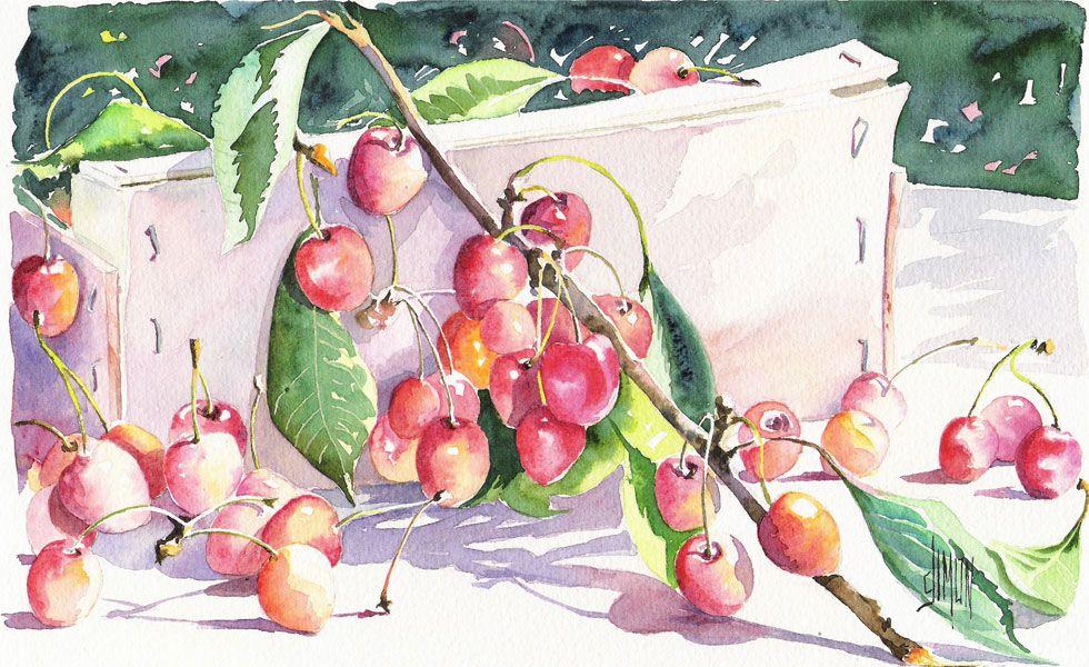 Watercolor Aquarelles Panier De Cerises Joel Simon Aquarelle