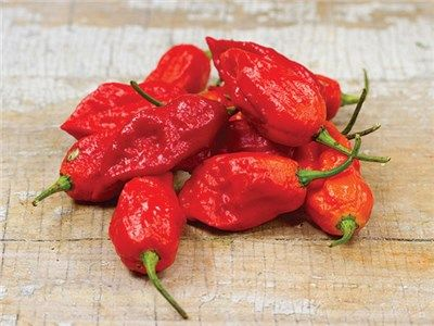 Bhut Jolokia Ghost Pepper - Also known as Ghost Pepper, Naga Morich. Legendary variety, one of the world's hottest peppers, if not the hottest, with readings in excess of 1,000,000 Scoville units!