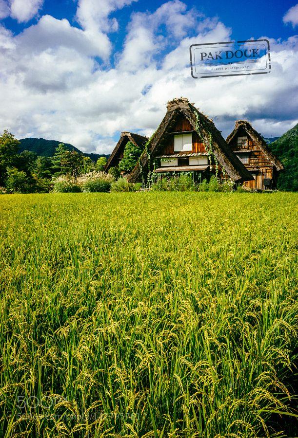 Popular on 500px : Shirakawa-go fields by PAkDocK