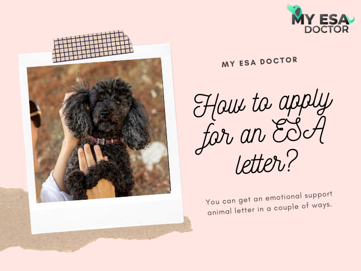 You can get an emotional support animal letter in a couple