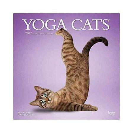 Yoga Cats 2017 Calendar Cat Yoga Animal Yoga Cats