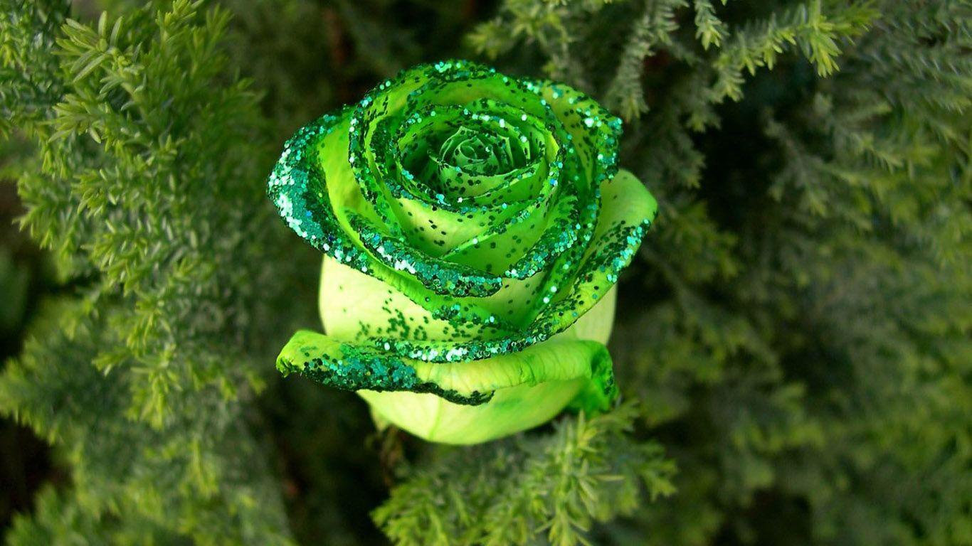 Beautiful flowers in the world google search flowers pinterest beautiful flowers in the world google search izmirmasajfo