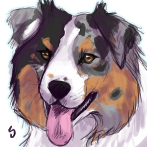 Digital Drawing I Made Of My Australian Shepherd Tori Dog