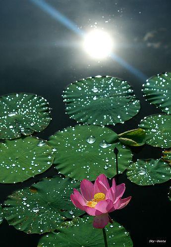 A Summer Day Beautiful Flowers Water Lilies Flower Garden