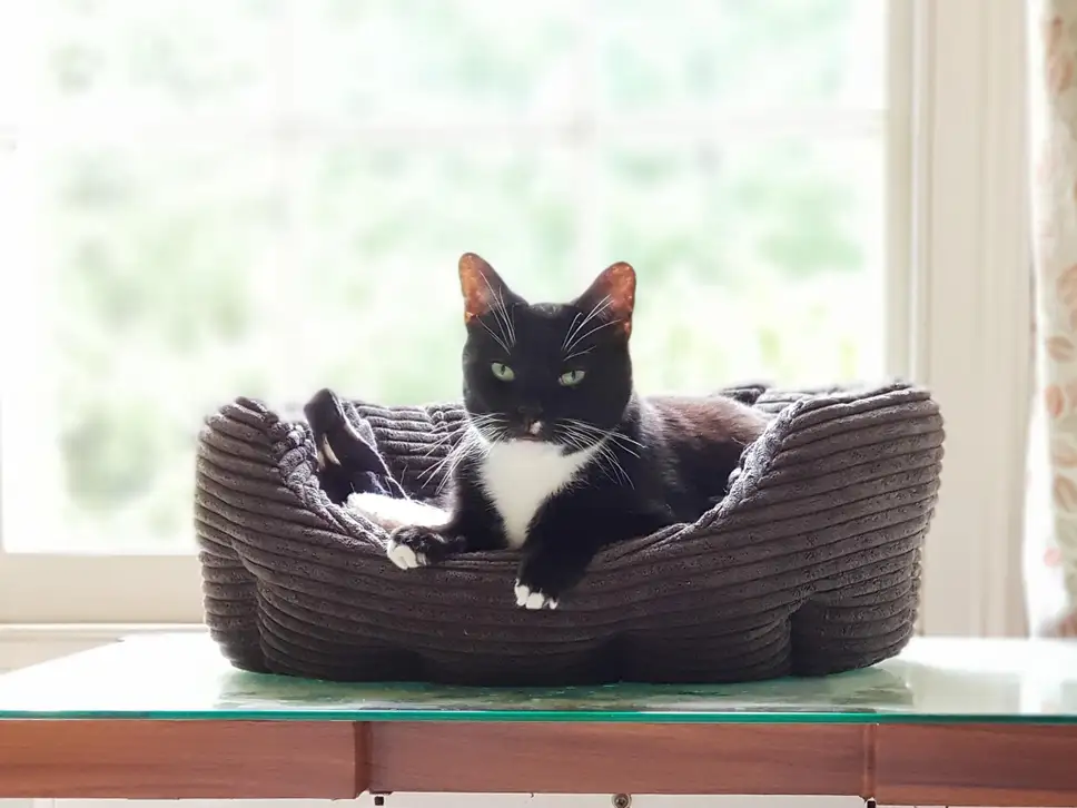 Loneliest Cat Faces Another Solo Christmas Because No One Wants To Adopt Him Cats Black Cat Day National Black Cat Day