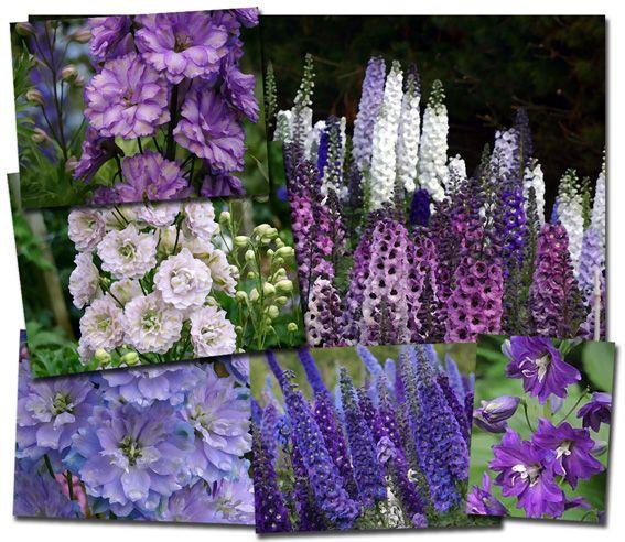 17 Best 1000 images about Secret Garden on Pinterest Poppy fields