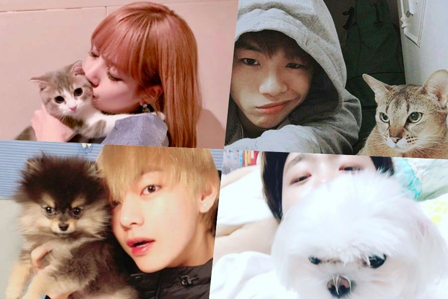 K Pop Idol Pets Who Are Almost As Famous As Their Owners In 2021 Pets Kpop Idol Idol