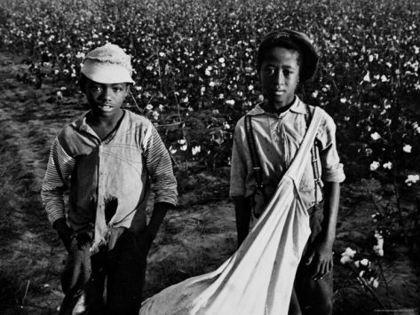 Young cotton pickers
