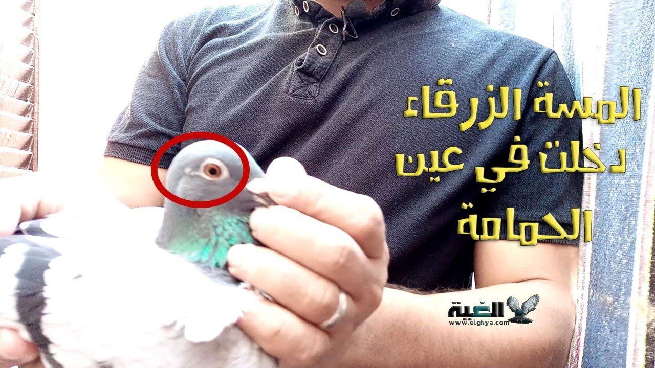 المسة الزرقاء دخلت في عين الحمامة الجنتيانا الزرقاء طريقة علاج جدري ا Live Lokai Bracelet Lokai Bracelet Bracelets