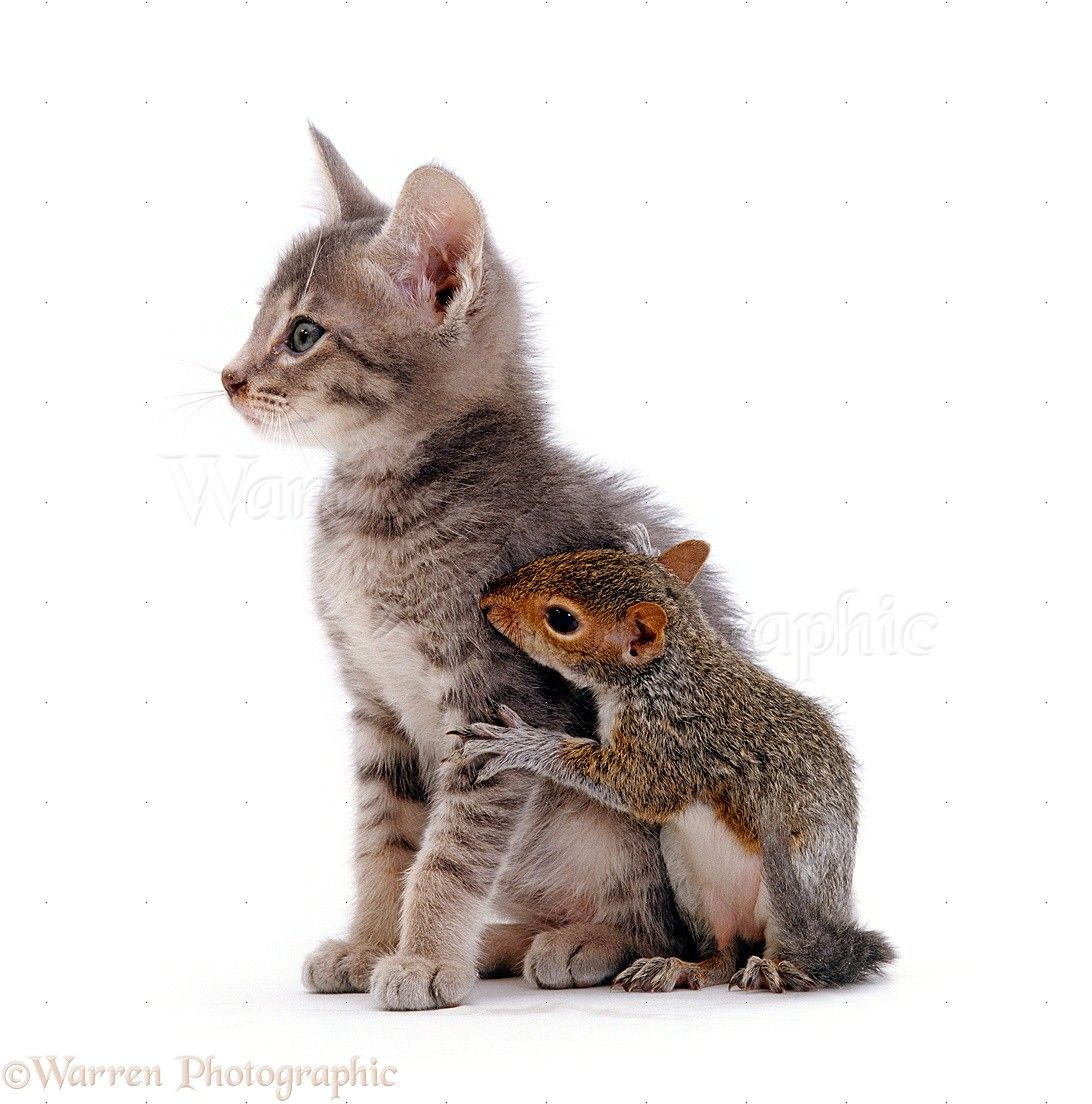 Friends Kitten Squirrel Cute Animals Baby Animals Animals Friends