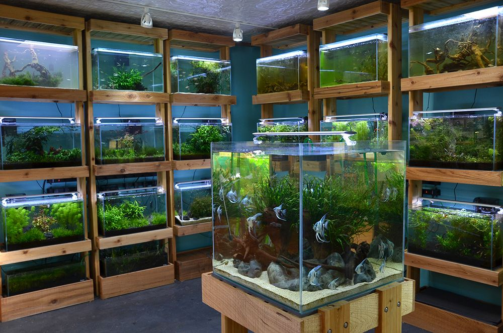 Aquarium zen seattle tropical fish store aquatic plants for Decoration zen aquarium