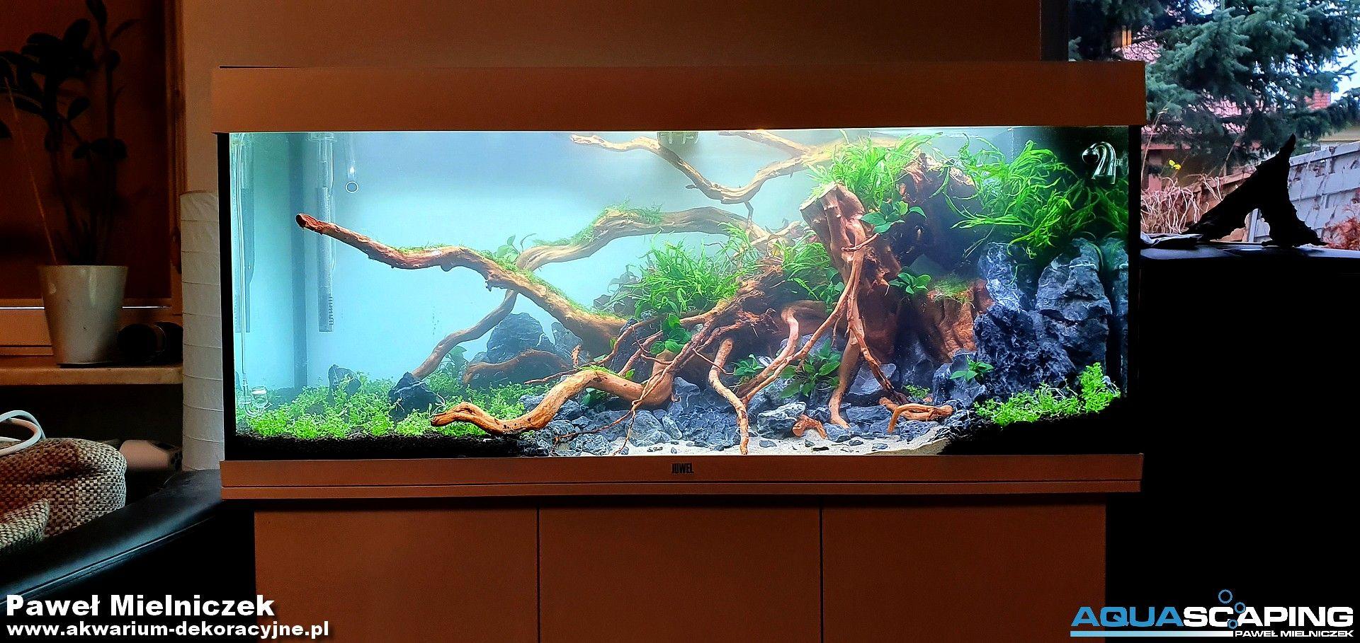 Akwarium Juwel Rio 240 In 2020 Nature Aquarium Aquascape Aquarium