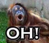 Orang Utan Monyet Monkey Ape Gambar Lucu Lucu Gambar