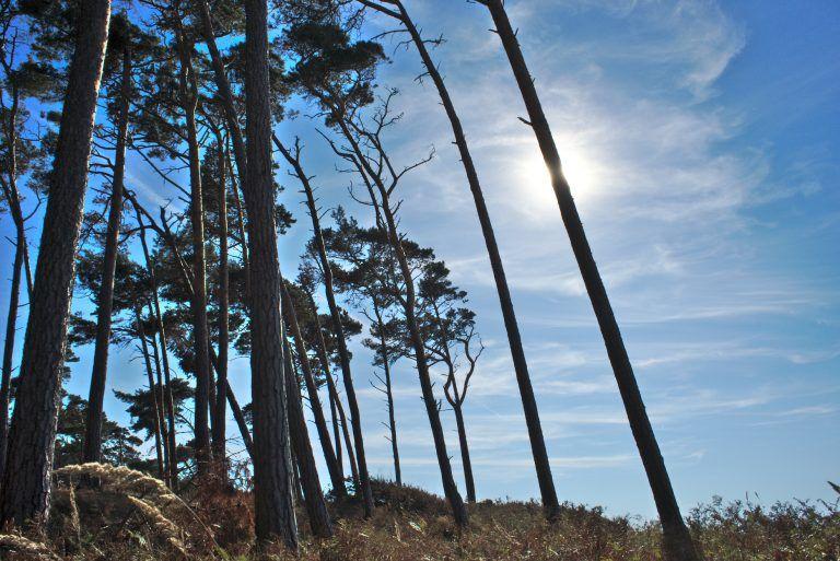 Bäume rascheln, Meeresrauschen   Weststrand und Darßer Ort   Prerow • Home