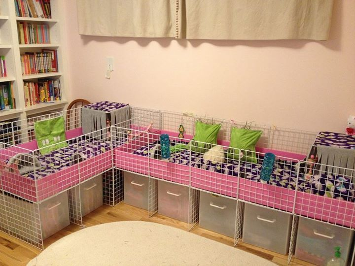 Here is a gorgeous cage that I just have to share. What pampered piggies living in this set up! C&C cages can be done up so nicely as shown here and can be made to fit in so many areas of your home :)