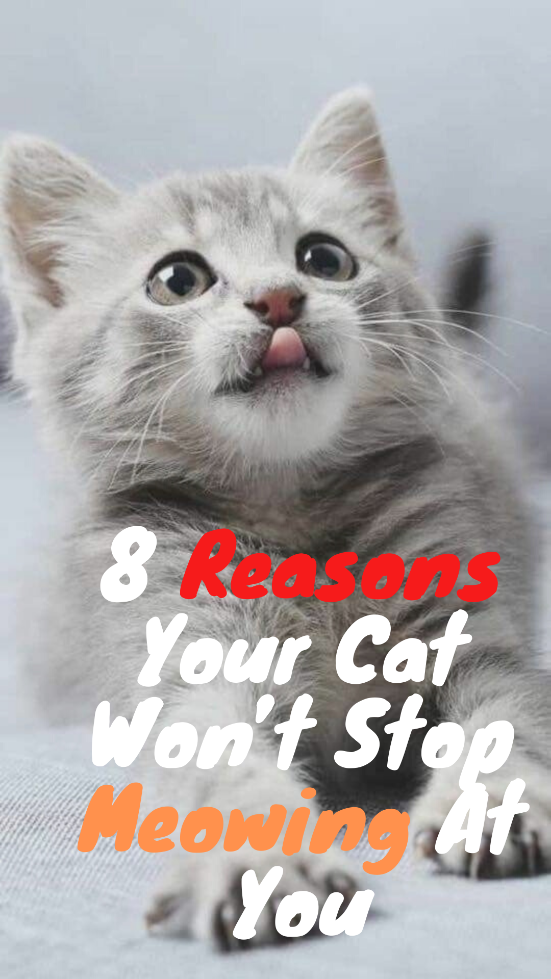 8 Reasons Your Cat Won't Stop Meowing At You Cats, Cat