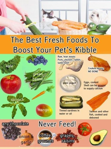 Pin By Alex Smith On Nyla In 2020 Dog Food Recipes Homemade Dog