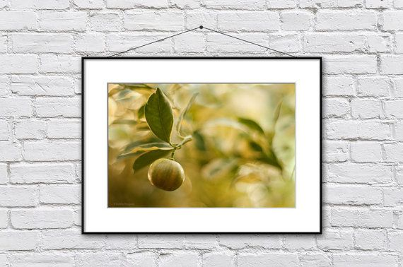 Kitchen Wall Art Citrus Photo Print by IonAnthosPhotography