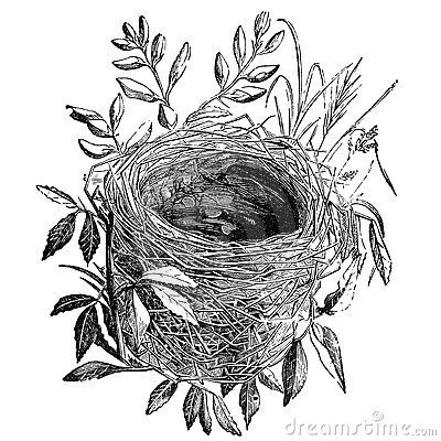 36++ Bird nest clipart black and white ideas in 2021