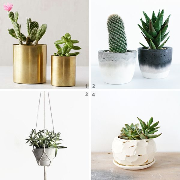 Nyc Based Plant Design Delivery Service The Sill Runs One Of My Favorite