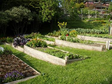 This is basically how I am going to attempt to transform my hillside into a veggie garden. Wish me luck as I have lots of work to do! -   22 garden beds on a hill ideas