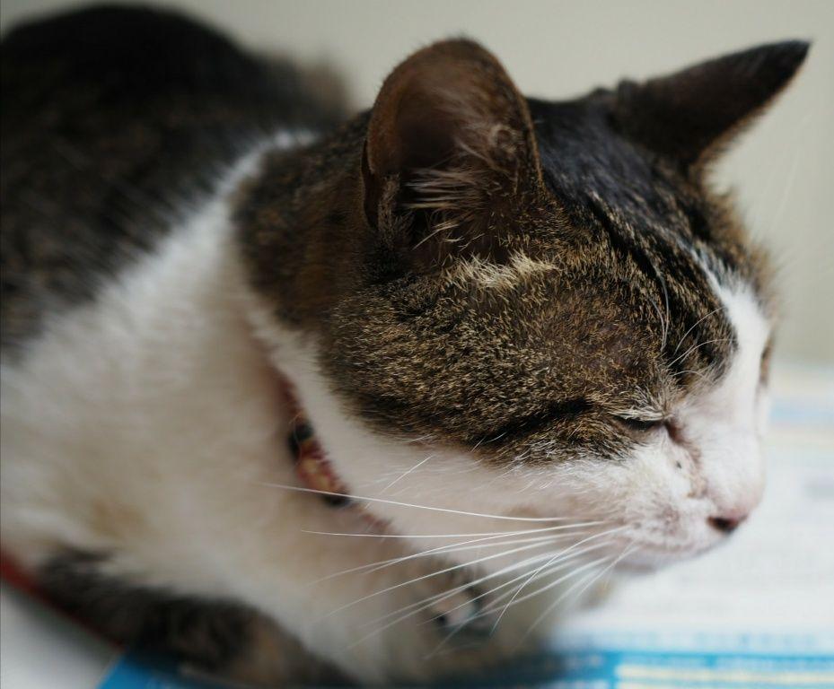 高齢猫は少しの食欲不振でガクンと弱ります 口内炎で食べれない老化による食欲不振 など原因は様々ですが食べなくなると回復もせず そのまま亡くなるケースもあるんです にゃあこ人間と違って猫の食欲不振は 猫 子猫 介護