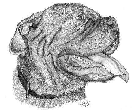 3 Gorgeous Sketch Of A Gorgeous Dog Bordeauxdog Honden Dieren
