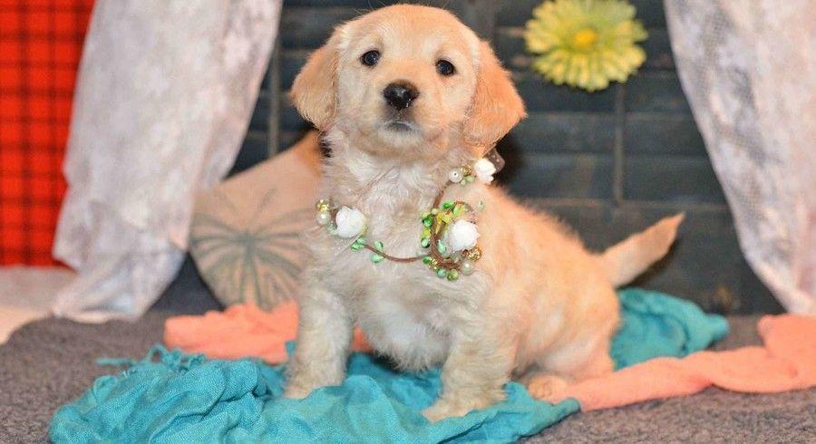 Pin On Animals To Adopt