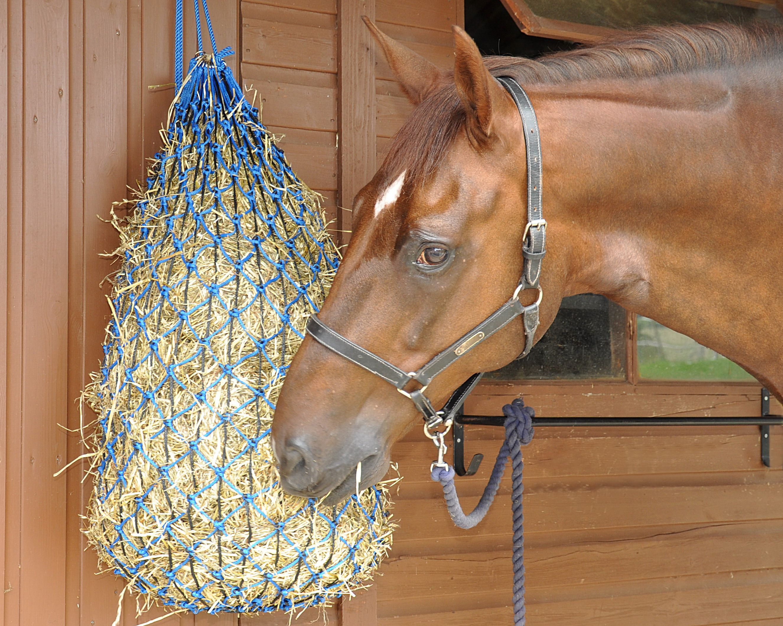 Horse Eating from Hay Net Mini horse