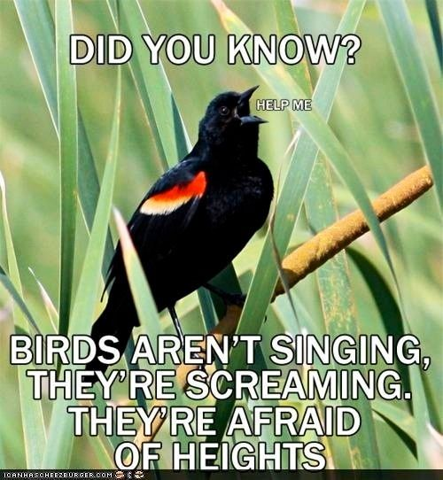 Birds Are Just Scared Of Heights Not Singing Screaming Funny Birds Funny Pictures Did You Know Facts
