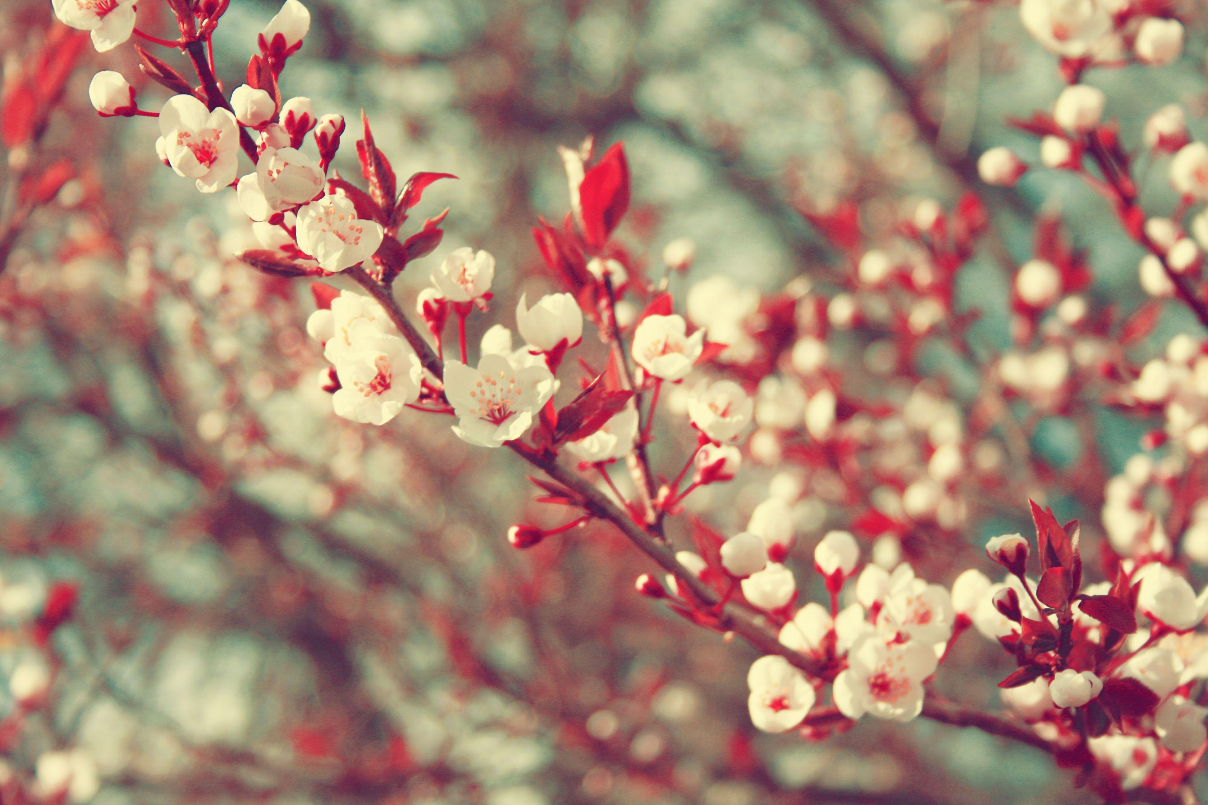vintage flowers photography - Pesquisa Google | ESTAMPAS ...