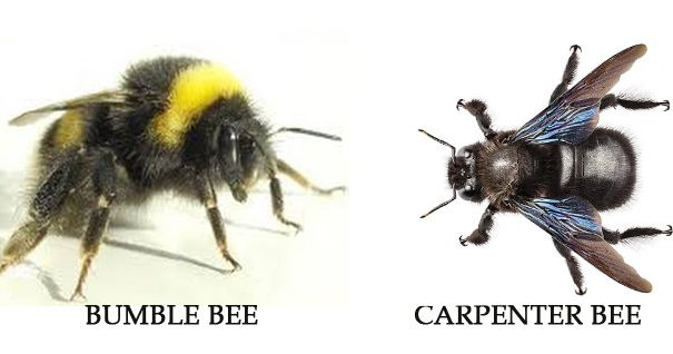 84a5c4e995f1efa42fff32c92797e175 - How To Get Rid Of Carpenter Bees Outside Naturally