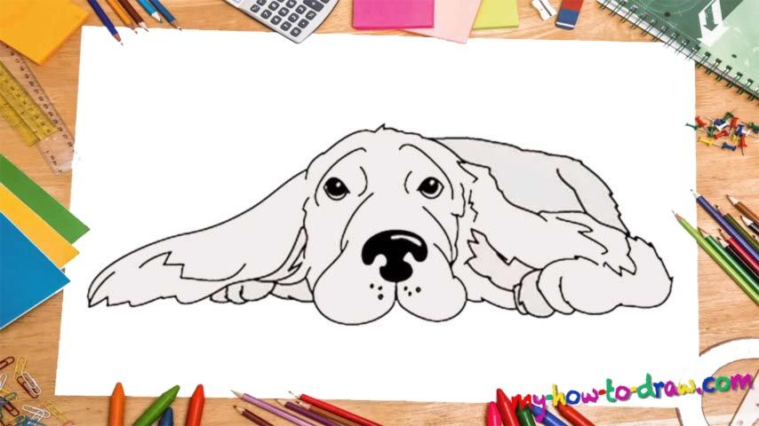 Learn How To Draw A Cocker Spaniel In One Minute In This Step By