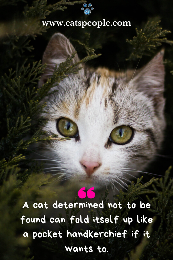 Cat Lover Quote Funny In 2020 Cat Lover Quote Cats Cat Quotes