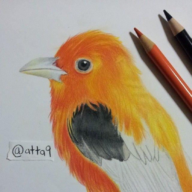 Bird Drawing Progress By Attta999 On Deviantart Bird Drawings Drawings Colorful Drawings