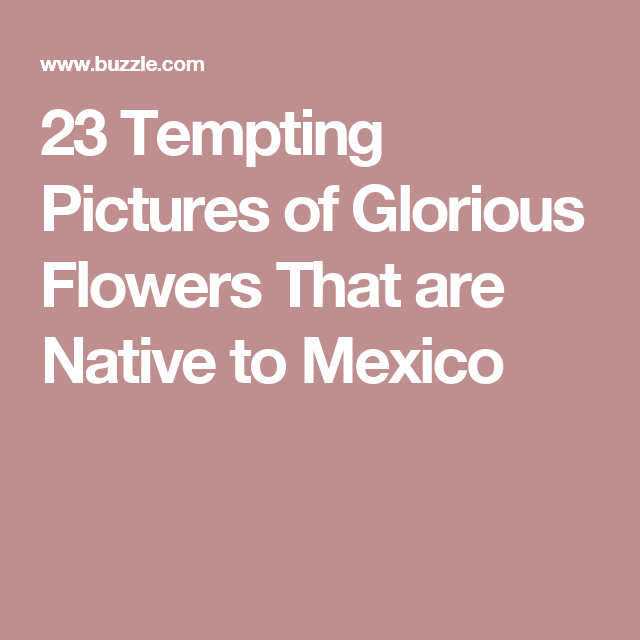23 Tempting Pictures of Glorious Flowers That are Native to Mexico