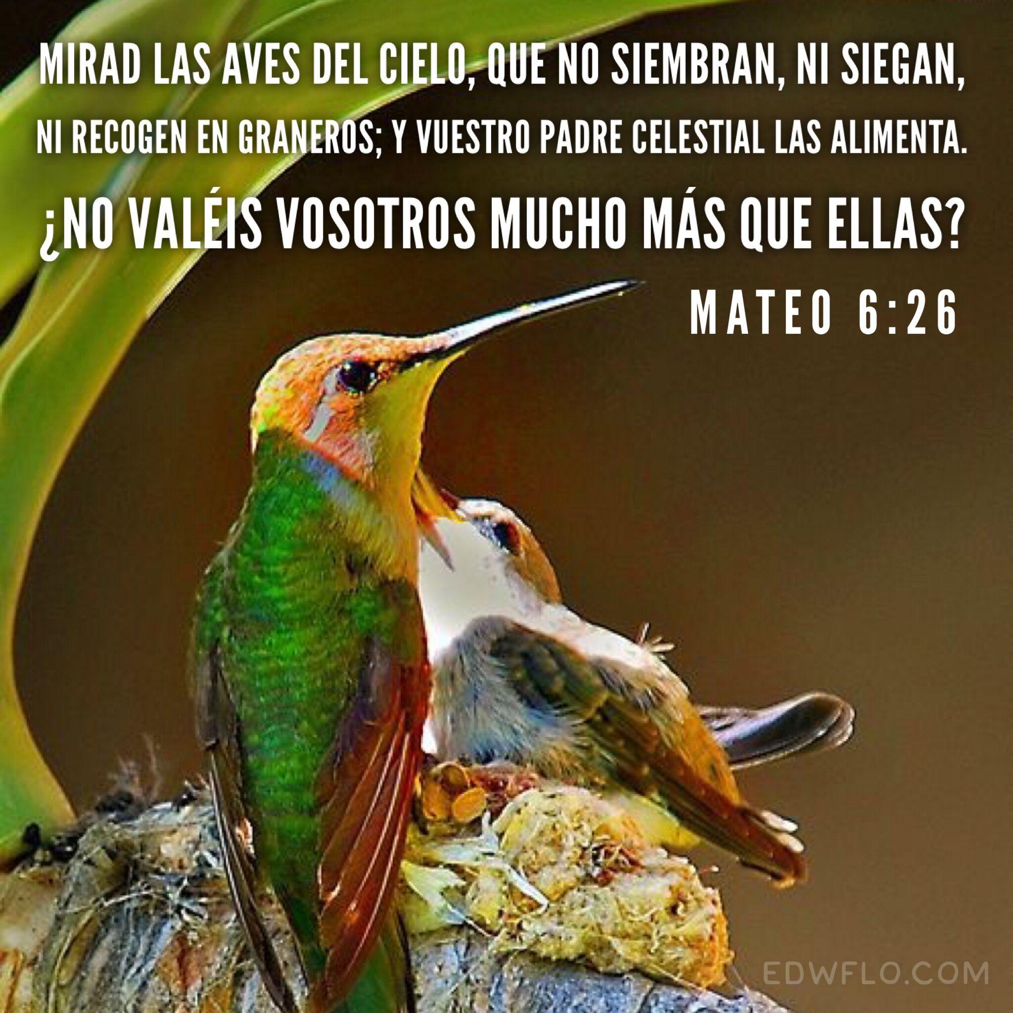 Mateo 6 26 Caminar Con Dios Frases Celebres De Filosofos Frases De La Biblia