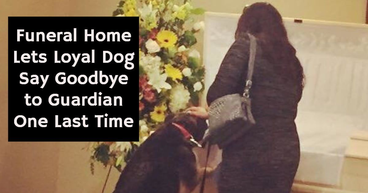 Funeral Home Lets Loyal Dog Say Goodbye To Guardian One Last Time Loyal Dogs Funeral Home Companionship