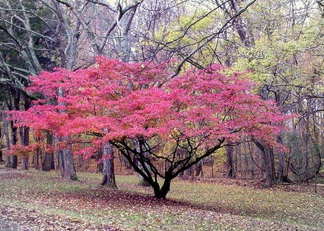 Use anatomy to identify trees anatomy autumn trees and leaves tree identification and anatomy the autumn tree mightylinksfo
