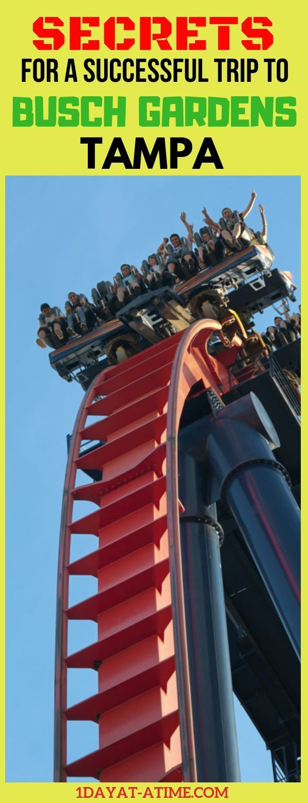 84a94d3bfe453b6e4236fa95c0993973 - How Crowded Is Busch Gardens Tampa