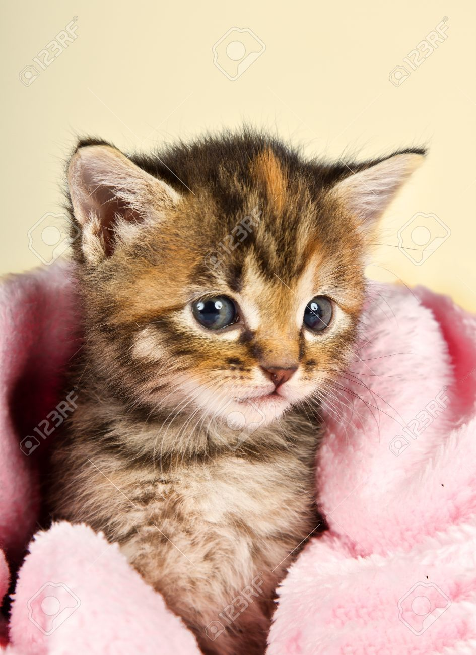Curious Little Kitten In A Pink Blanket Looling So Cute Little Kittens Pink Blanket Kitten