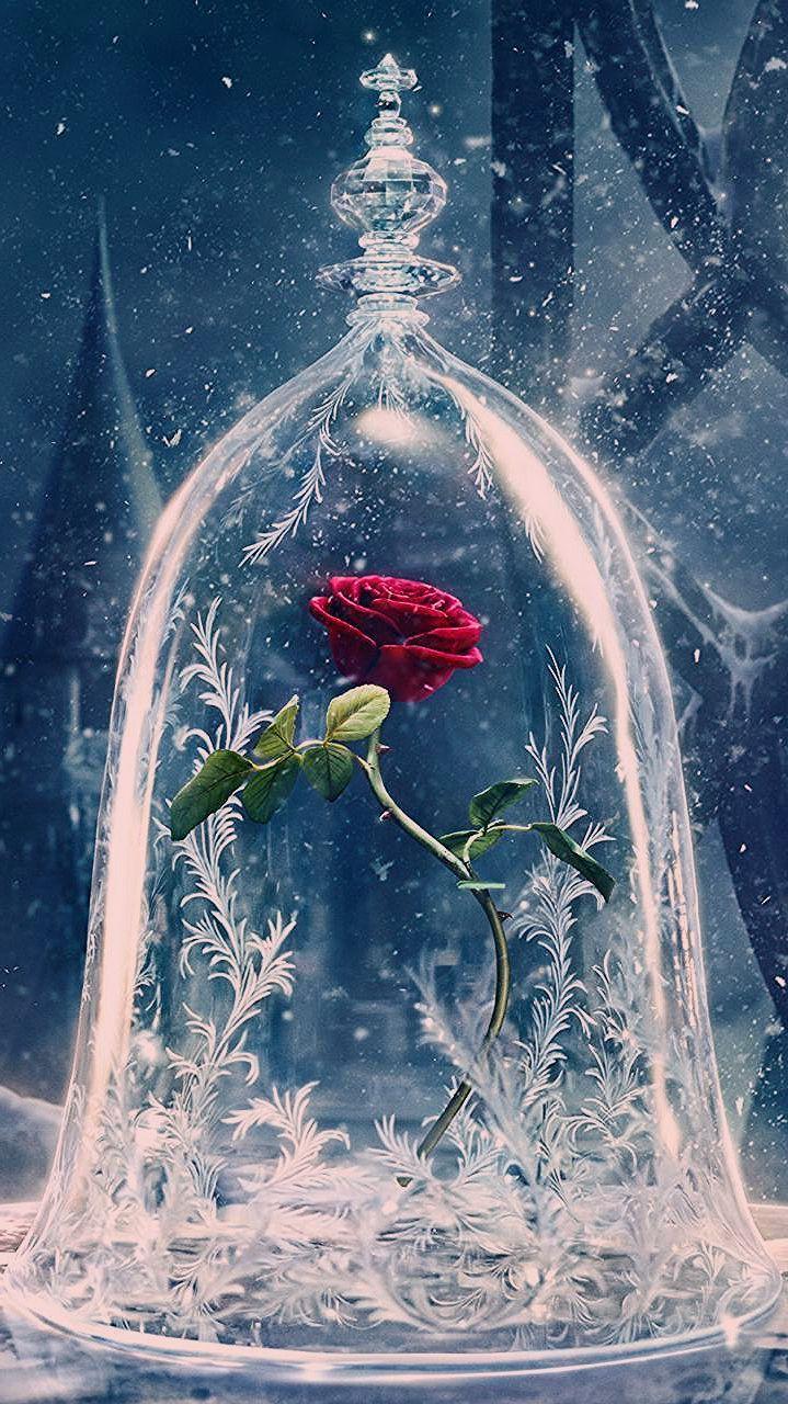 Rose Belle Et La Bete Dessin : belle, dessin, D'écran, Huawei, Belle, Bête, (2017), #belle, #Bête, #décran, #f…, –…, Beauty, Beast,, Flower, Phone, Wallpaper,, Marvel, Wallpaper
