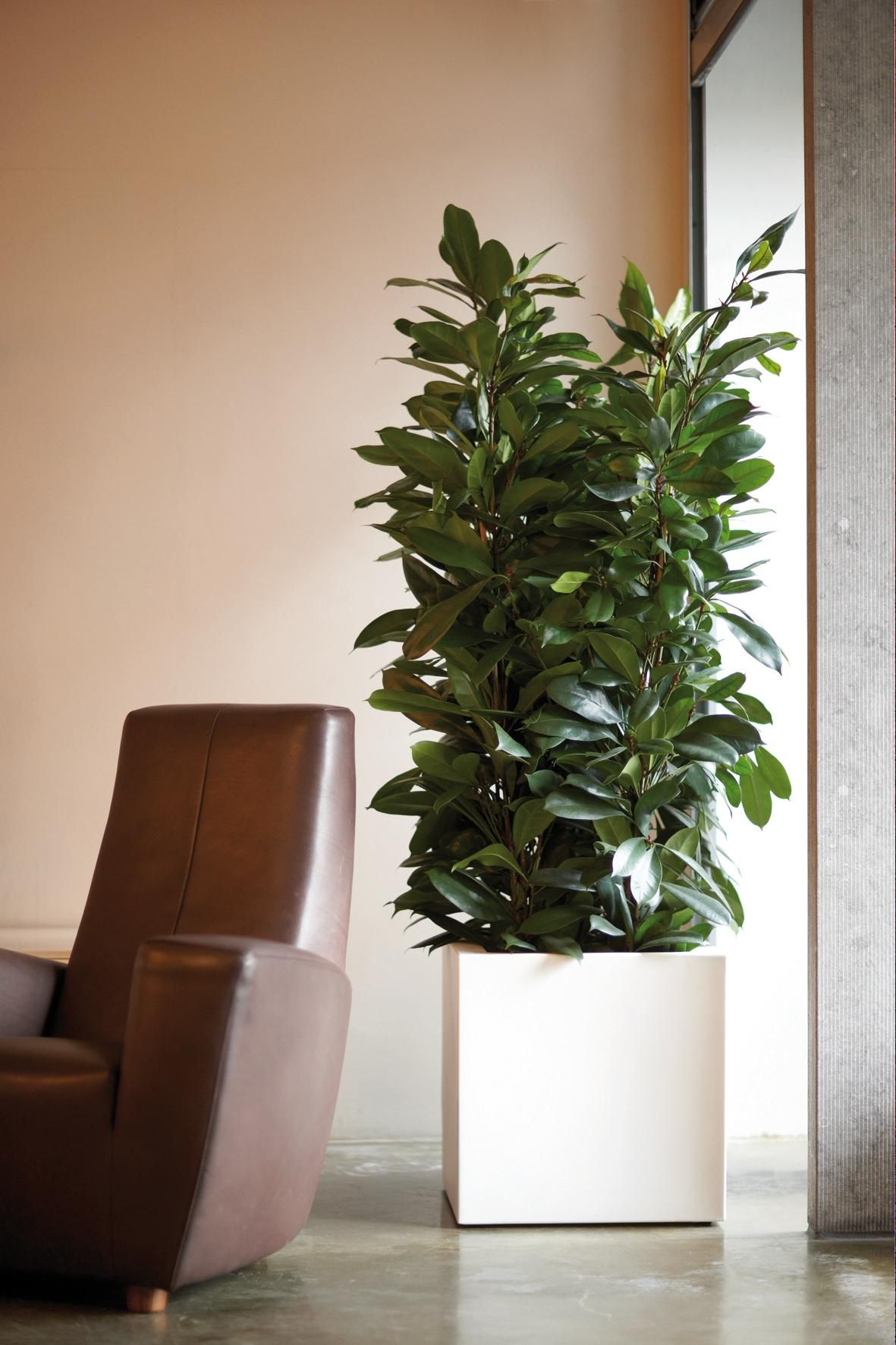 Elho Pure Square Http Www Webloom Nl Plant Decor Indoor Interior Plants