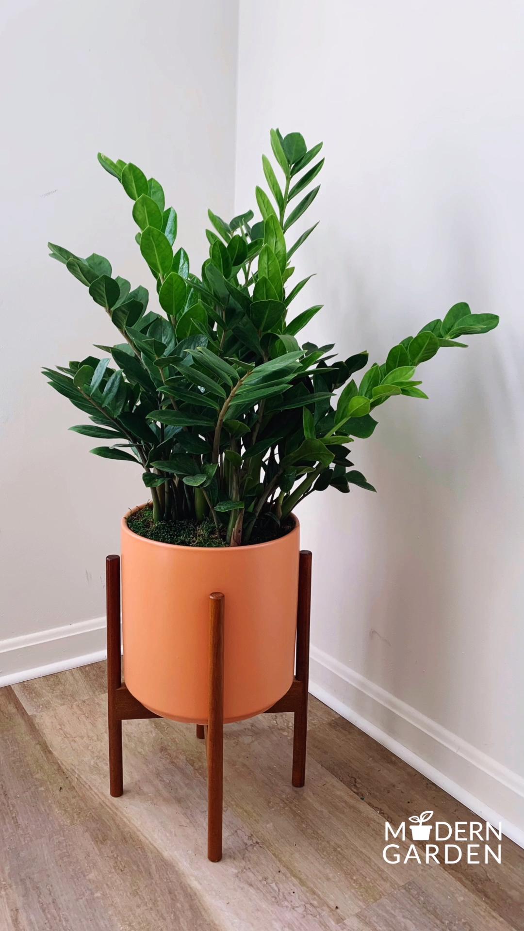 Photo of Indoor Plants, Delivered.