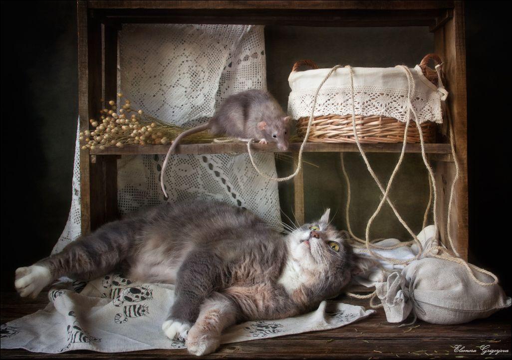 кот и мыши картинки фото это