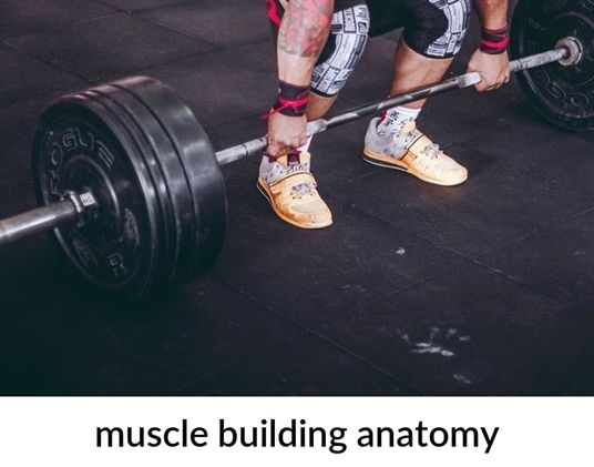 muscle building anatomy_40_20190321161043_51 top #muscle