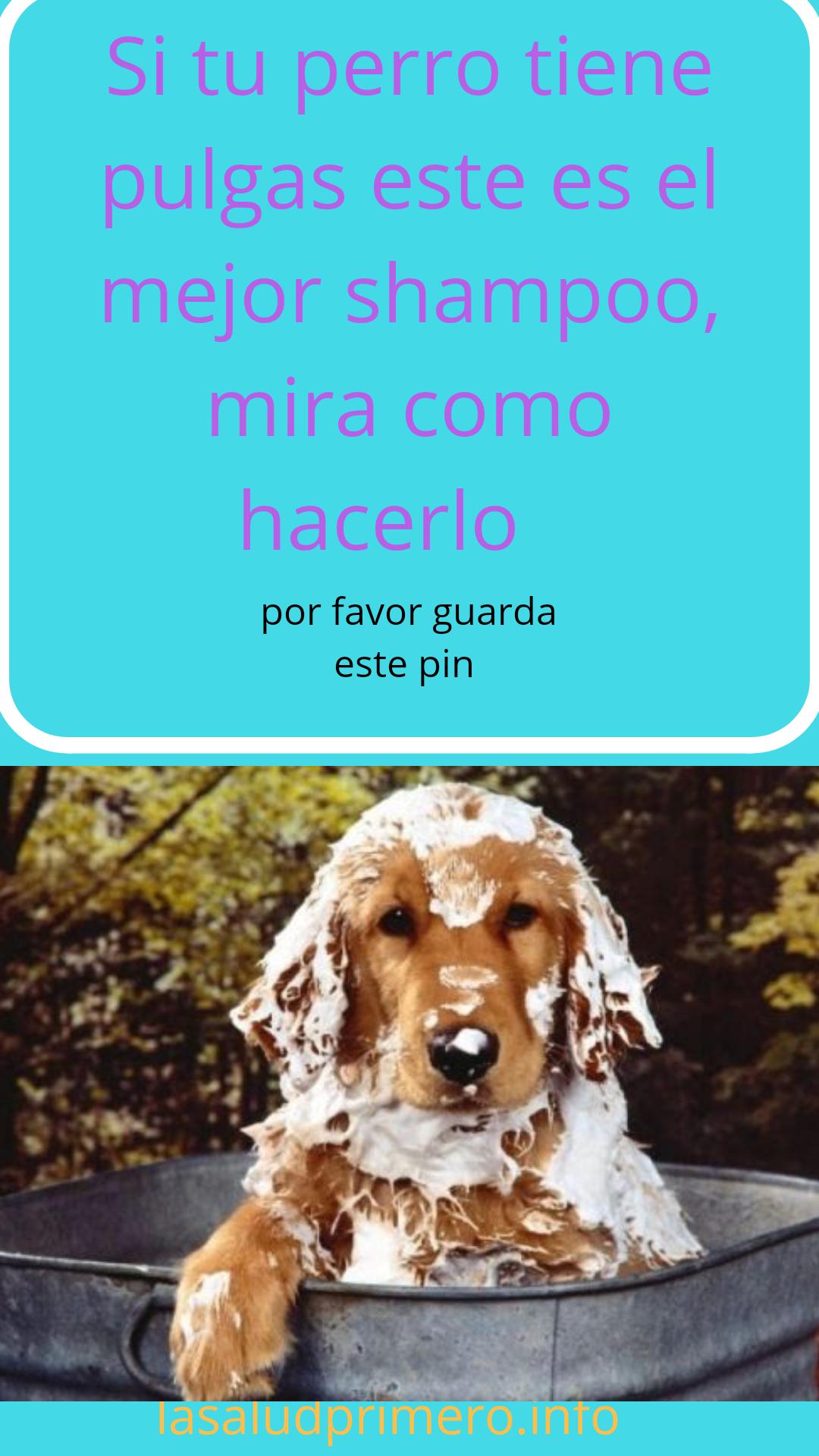 Como Matar Las Pulgas De Mi Perro Remedios Caseros La Salud Primero Pulgas Perros Pulgas Perros